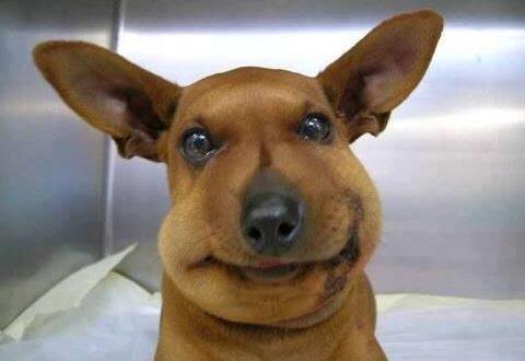 fotos de perros graciosos